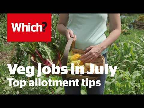 Vegetable gardening jobs for July – Which? Gardening