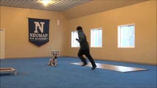 Libby (german Shepherd) Dog Training Video Minneapolis