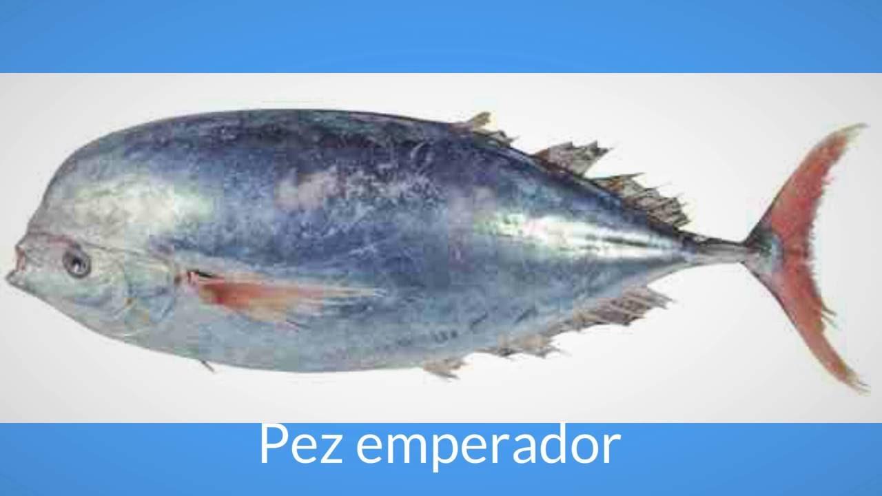 M s informaci n del pez espada youtube for Curiosidades del pez espada
