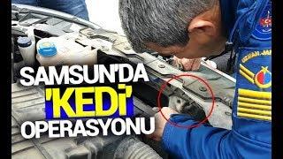 Samsun'da 'kedi'operasyonu