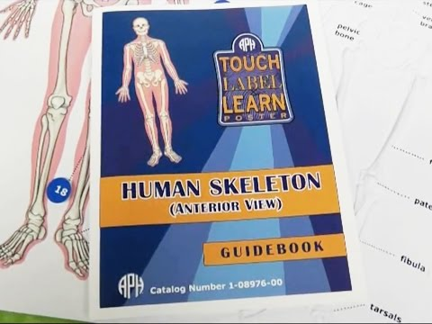 Quick Tip: Touch, Label, & Learn Poster: Human Skeleton