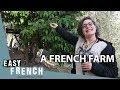 A French Farm (1)   Super Easy French 20
