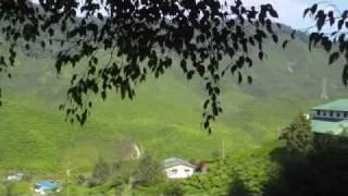 Bharat Tea Plantation@Cameron Highlands.