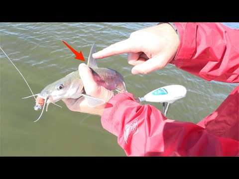 How To Safely Hold A Catfish (Without Getting Spined)