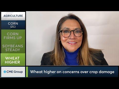 February 22 Grains Commentary: Virginia McGathey
