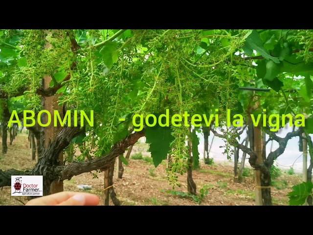 Abomin - Vittoria - Acinino scomparso
