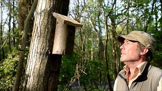 How To Make A Bird Box (bird House) From A Log