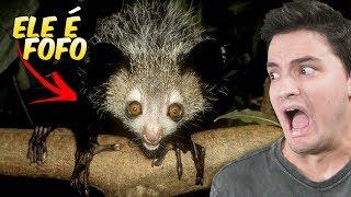 Criaturas horríveis que são FOFAS! [+10]