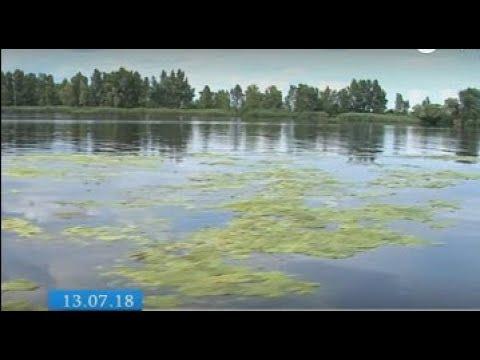 ТРК ВіККА: Фахівці радять черкащанам утриматися від купання в «зеленому» Дніпрі