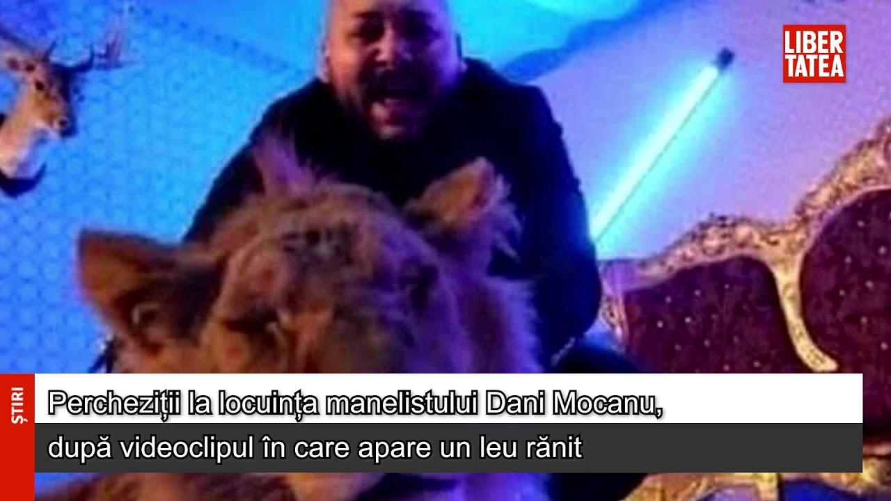 Percheziții la locuința manelistului Dani Mocanu, după videoclipul în care apare un leu rănit...