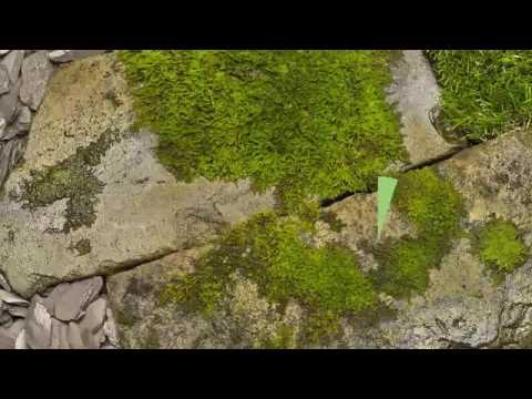 Moss SD