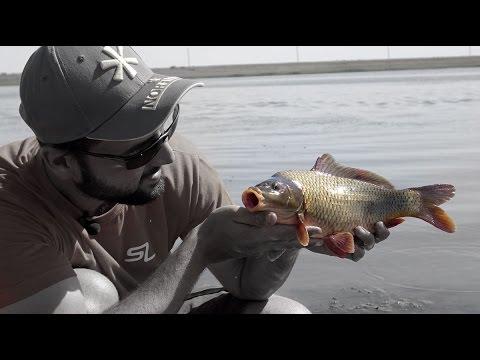 как не перекормить рыбу при ловле фидером