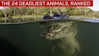 The 24 deadliest animals, ranked