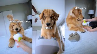 my-dog-reacts-to-head-massager