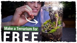 Make an AWESOME Terrarium for FREE!