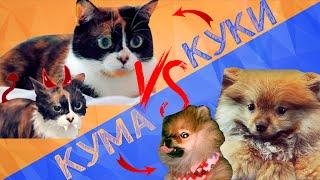 ТОП 10 ДОМАШНИХ ЖИВОТНЫХ РУССКИХ ЮТУБЕРОВ / КУКИ или КУМАЧАН?