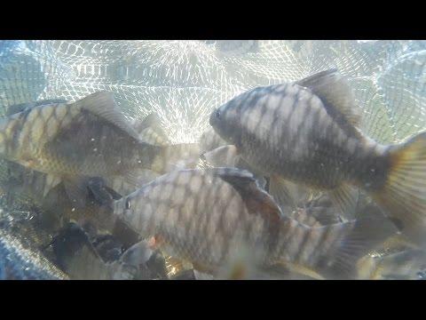летняя рыбалка на карася - 2016-05-19 11:28:33