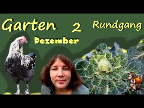 Gartenrundgang Dezember Teil 2 │ Garten, Kaninchen und Hühner