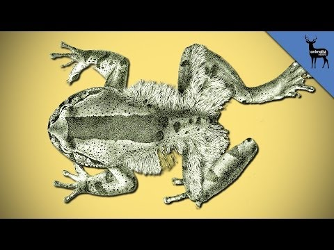 Why Does This Frog Break Its Own Bones?