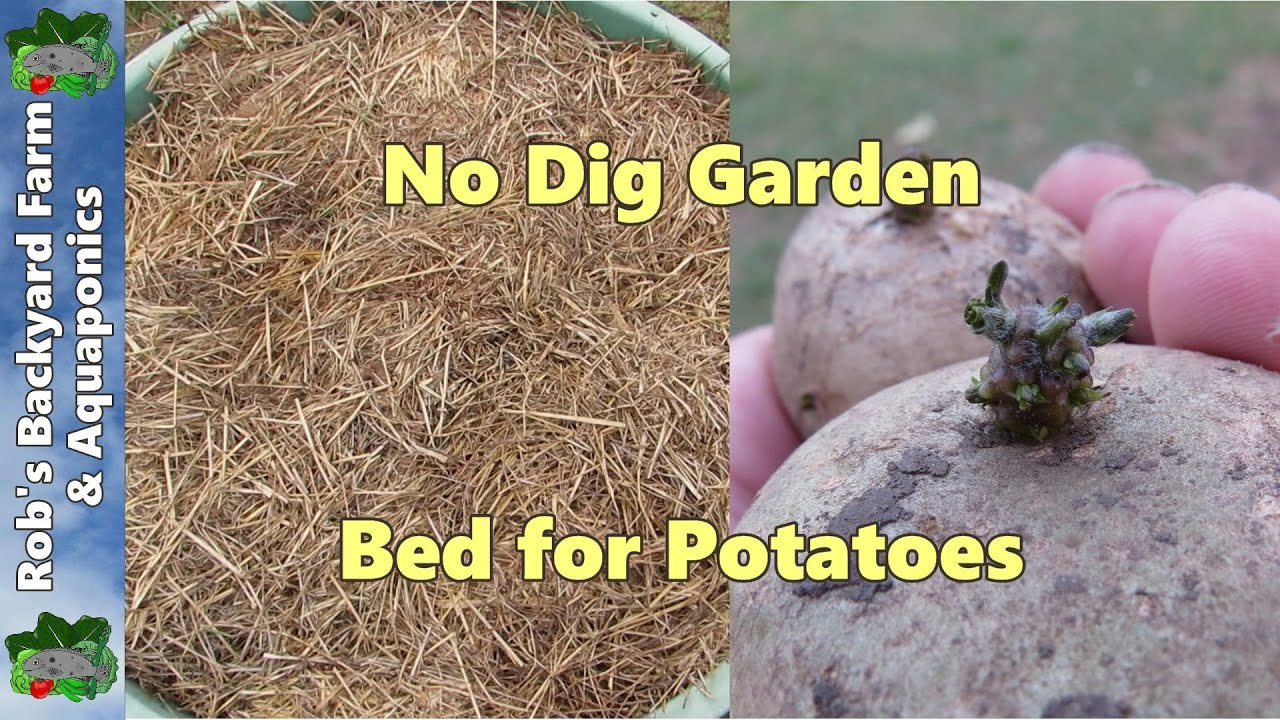 No Dig garden bed for Potatoes.. - YouTube
