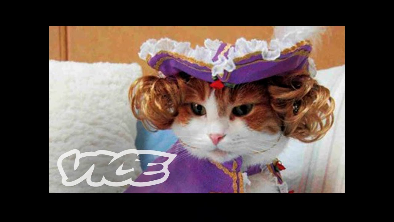 Cats In Funny Outfits & Cats In Funny Outfits - YouTube