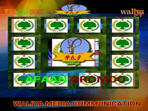 voe waliya media communication QAROO OROMO SPECIAL program