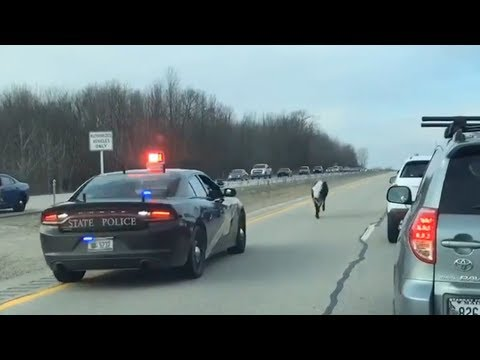 Michigan State Police Chase Cow On Highway