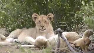 ECO VOLONTAIRE EN AFRIQUE DU SUD