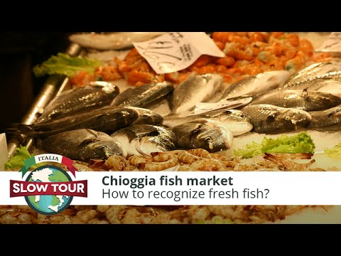 Chioggia fish market   Italia Slow Tour