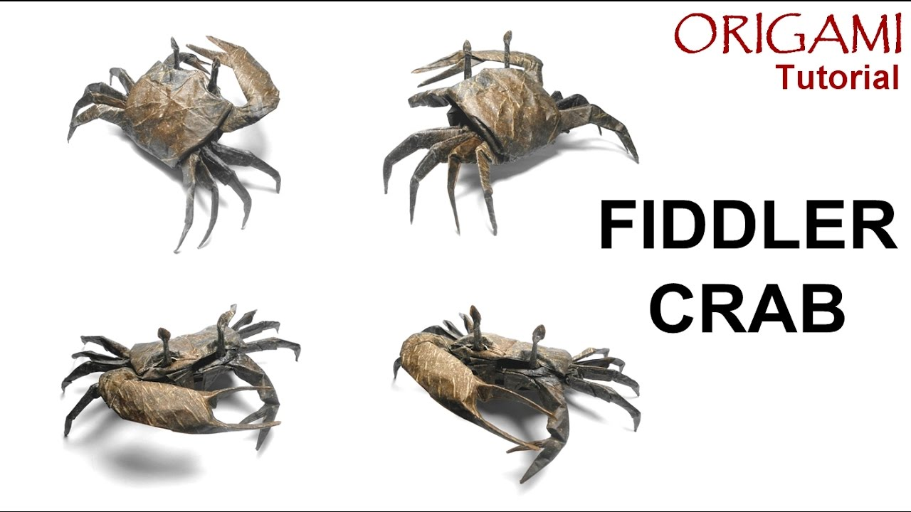 Diagram Of A Fiddler Crab - Wiring Diagram •