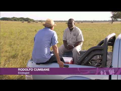 Fast Track 30.3.2013 Mozambique Direct
