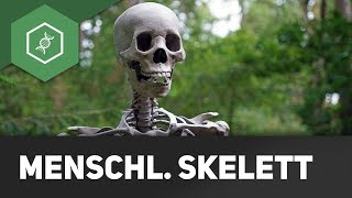 Das menschliche Skelett (Basics) ● Gehe auf SIMPLECLUB.DE/GO & werde #EinserSchüler
