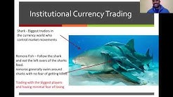 Deep Dive Into Institutional Forex Trading