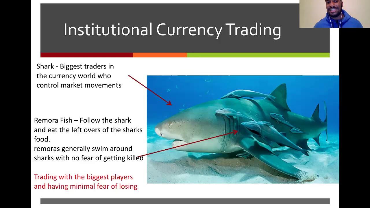 Prekyba rykliais. Ir Baltijoje gyvena rykliai, kuriuos reikia saugoti