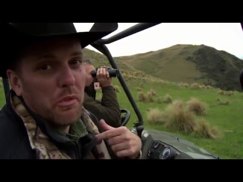 New Zealand Stag - Guided by Four Seasons Safaris