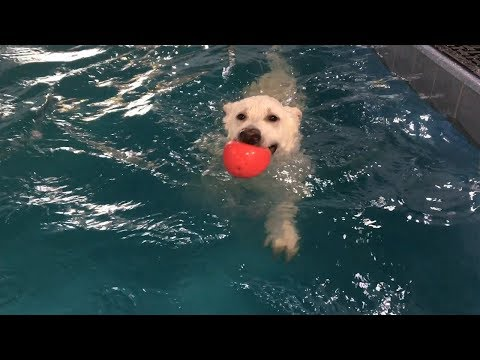 Swimming With Dogs!