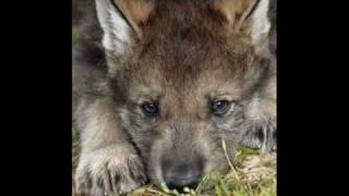 Владимир Высоцкий - Охота на волков!(Мой клип на песню Владимира Высоцкого
