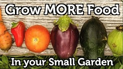 Grow a lot of Food in a Small Garden - 10 easy tips