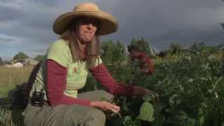 Happy Heart Farm CSA with Bailey Stenson