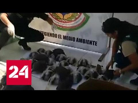 Полиция Перу перехватила необычный груз