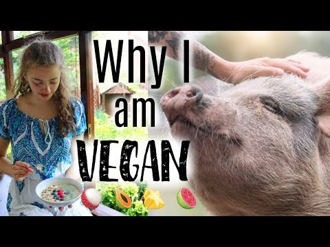 The Truth: Why I Went Vegan (non preachy!!) 🐷🍉✨