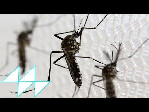 4 ยุงพันธุ์ดุ พาหะนำโรคร้ายอันตรายถึงชีวิต / 4 Mosquitoes Carry The Deadly Disease