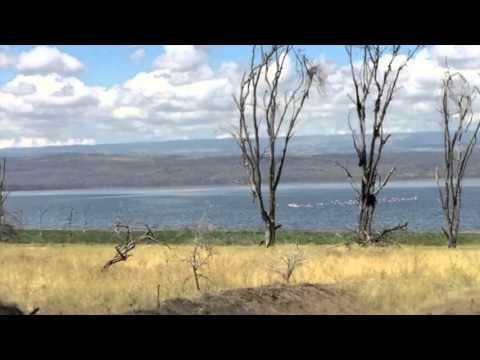 Lake Nakuru National Park -  Safari Adventure