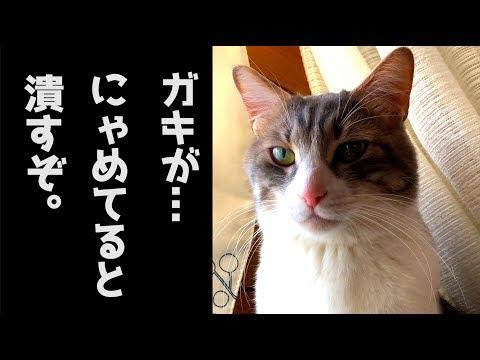 【暴君復活】やられっぱなしのスカーがついに反撃!魂の猫パンチが炸裂…!!