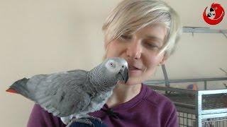 Gadająca papuga ZARA - Gaduła Roku 2016