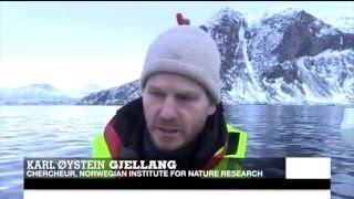 Norve?ge : Tourisme et réchauffement climatique