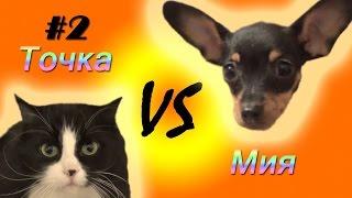 Кошка Точка против Той-терьера Мии №2 (CatVSDog#2)