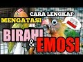 Cara Mengatasi Lovebird Birahi Dan Lovebird Emosi Part  Cara Paling Efektif Untuk Lovebird  Mp3 - Mp4 Download