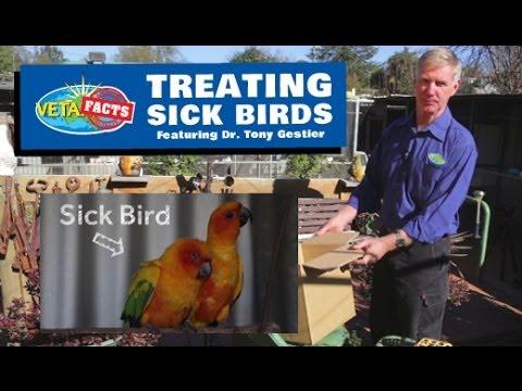 Treating Sick Birds