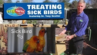 Treating Sick Birds